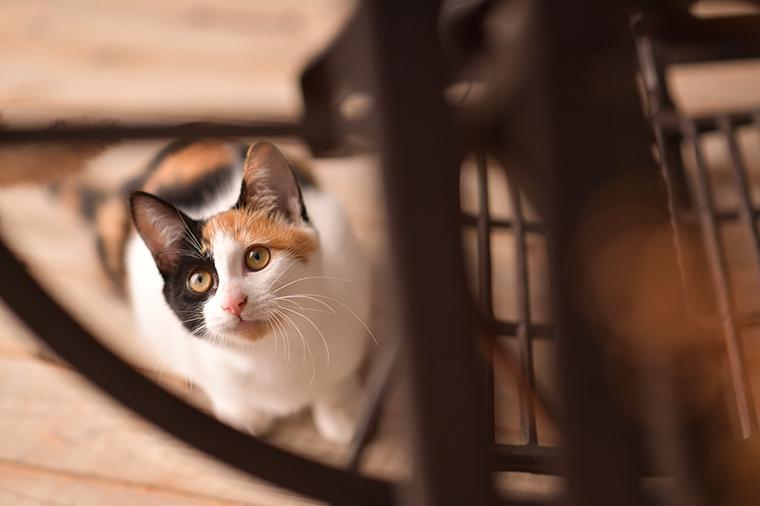 猫 奈良市 三毛猫 女の子 ペットフォト