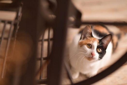 猫 三毛猫 ペットフォト 奈良市 6ヶ月