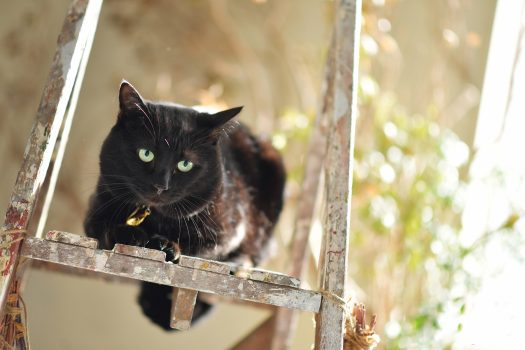 黒猫 ペットフォト 奈良市