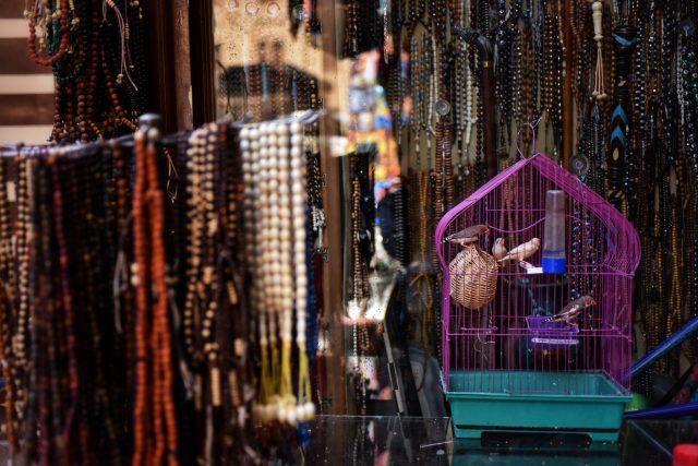 文鳥 インコ エジプト
