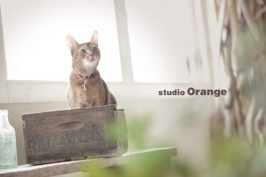 ペットフォト 奈良市 スタジオオレンジ 猫