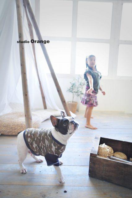 犬 フレンチブル 迷彩 ペット撮影 奈良