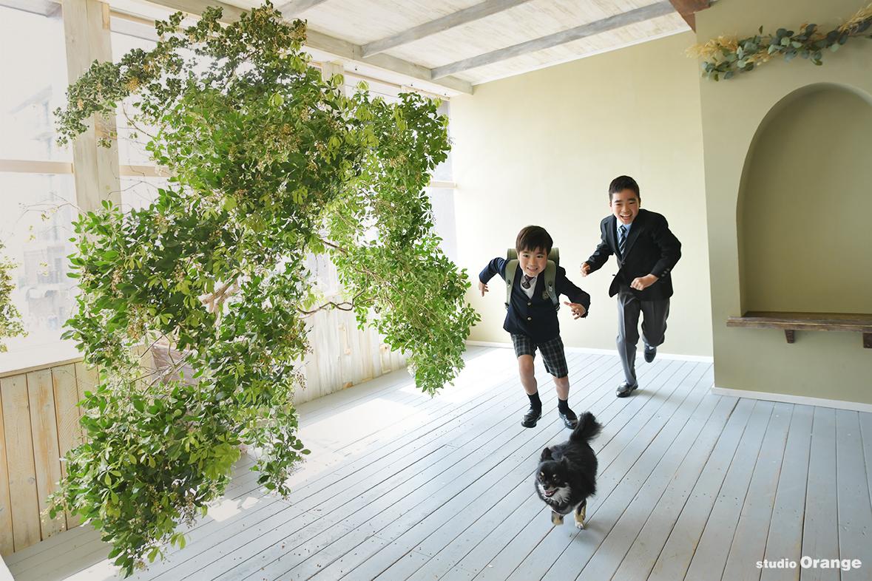 チワワと一緒 兄弟撮影 小学校入学 緑のランドセル