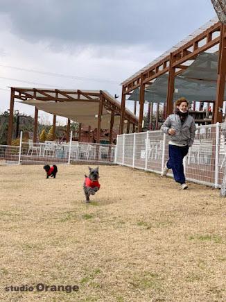 ネスタリゾート神戸 グランピング 神戸 社員研修 旅行 ドッグラン 犬 走る