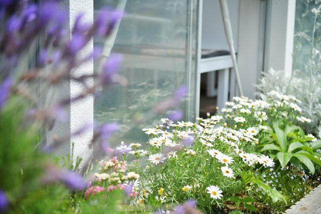 花壇 白い花 ラベンダー