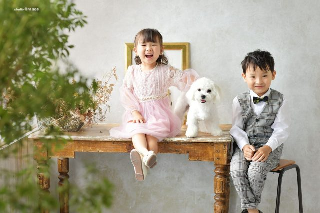 七五三 ドレス ペット撮影 マルチーズ 奈良 フォトスタジオ 三歳女の子 五歳男の子