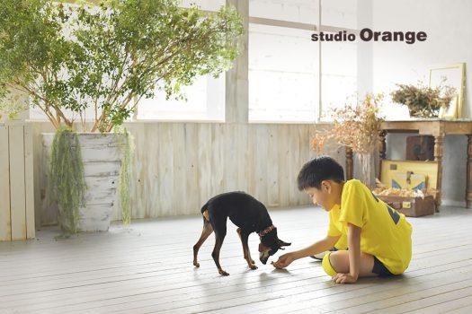 奈良 写真館 ペット