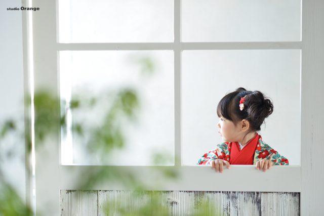 七五三 3歳女の子 椿柄の着物 ご祈祷