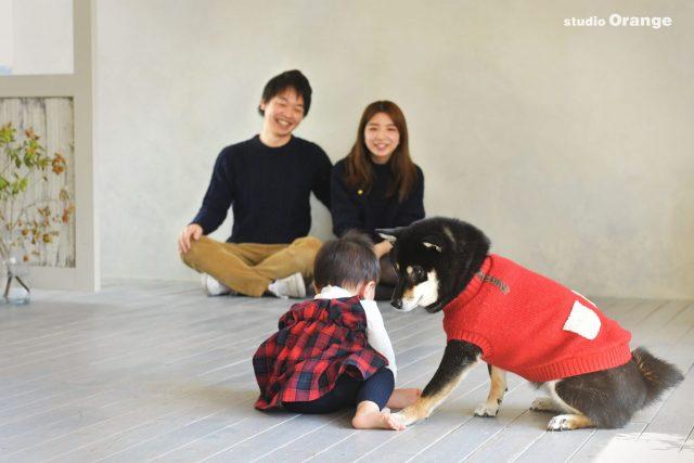 家族写真 ペット ペットフォト 赤ちゃん スタジオ 奈良 写真館 スタジオオレンジ 柴犬 犬
