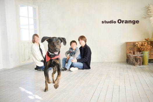 ペット 家族写し 私服 犬 フォトスタジオ 奈良店 オレンジ 写真館