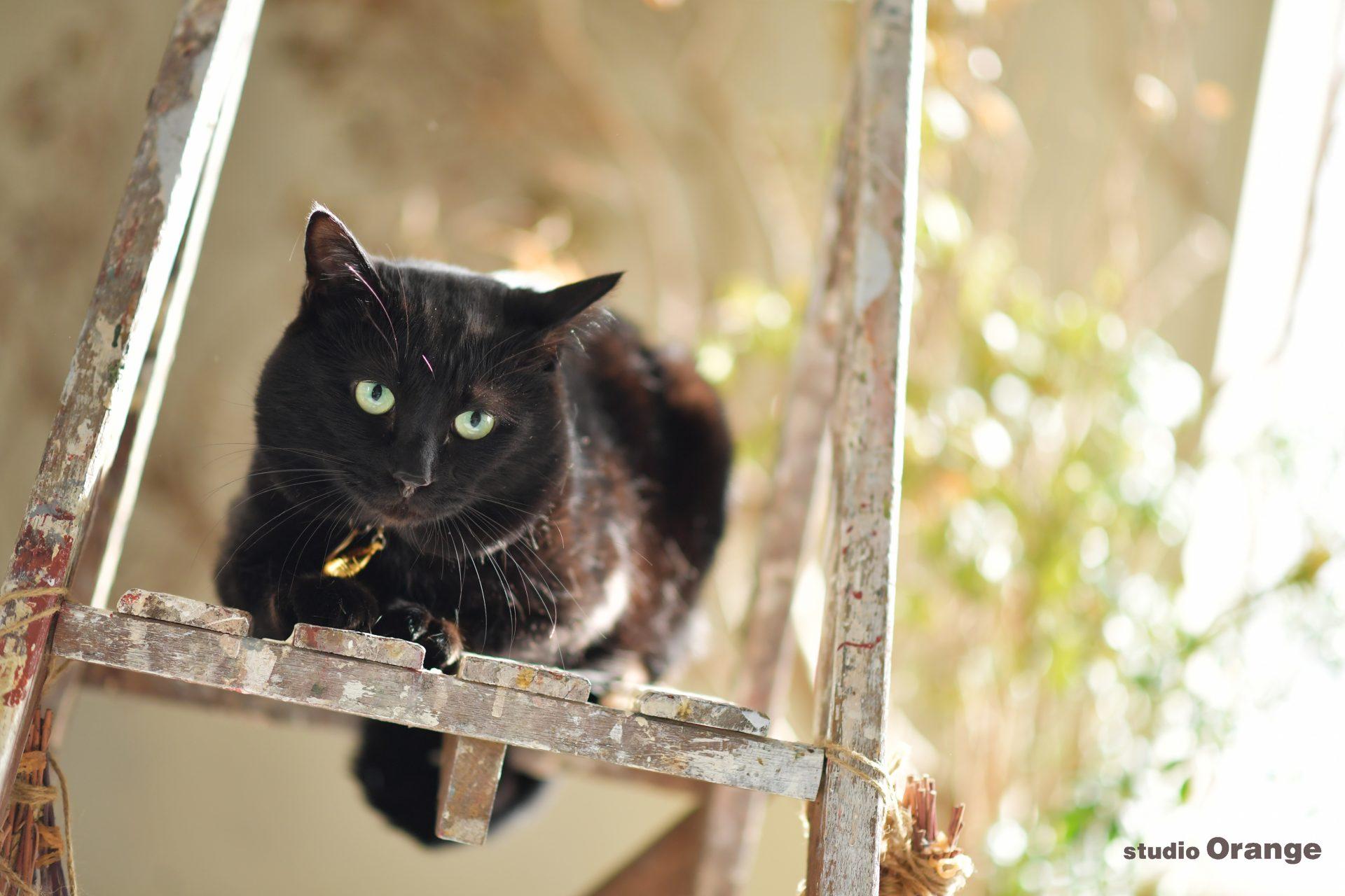 黒猫 ブラックキャット 奈良市 ペットフォト