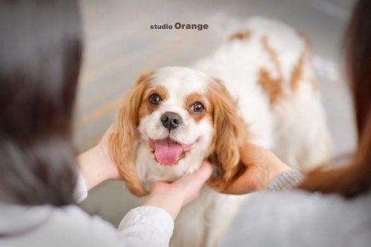 ペット 奈良市 写真館 フォトスタジオ 犬 犬ちゃん ペットフォト