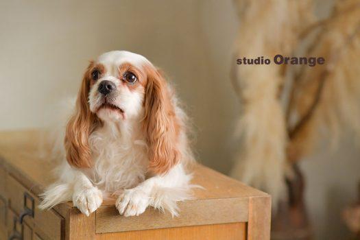 奈良店 フォトスタジオ 写真館 ペット 犬 ペット撮影