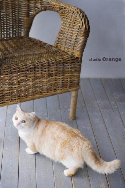 猫 ペット撮影 スタジオオレンジ